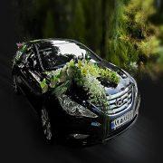 گل آرایی-ماشین-عروس